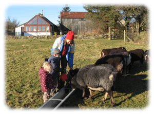 Children help with feeding sheep